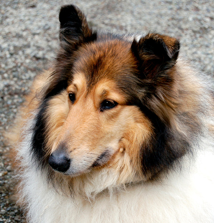 Pet Photography in Port Port Townsend